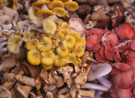 Colourful selection of mushrooms