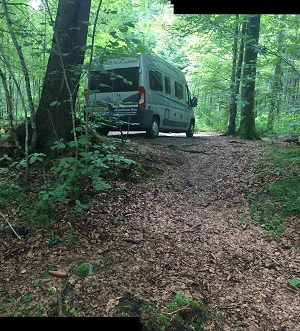 Planet Campervan Hire Woodland Camping