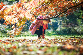 Girl picking up Autumn leaves